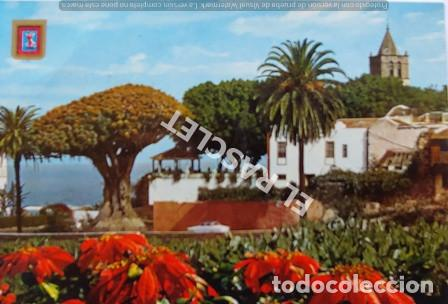 ANTIGÜA FOTO POSTAL DE TENERIFE - EL DRAGO MILENARIO - CIRCULADA AÑO 1987 (Postales - España - Canarias Moderna (desde 1940))