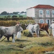 Postales: TENERIFE-LOS RODEOS-CAMPESINOS EN FAENA DE LA TRILLA-POSTAL ANTIGUA-(70.602). Lote 205728725