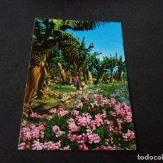 Postales: POSTAL DE CANARIAS - FLORES Y PLATANERA- LA DE LA FOTO VER TODAS MIS POSTALES. Lote 207056366