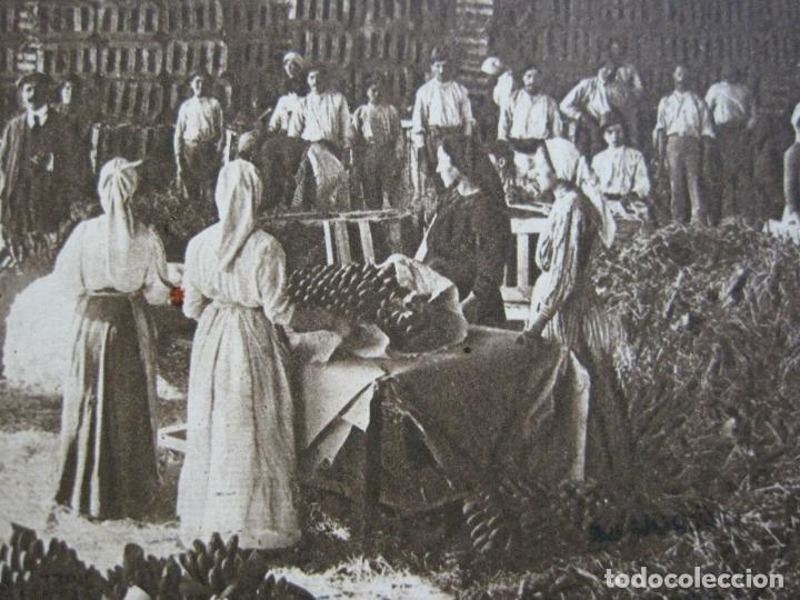 TENERIFE-EMPAQUETADO DE PLATANOS-POSTAL ANTIGUA-(71.397) (Postales - España - Canarias Antigua (hasta 1939))