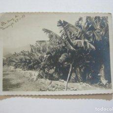 Postales: SANTA CRUZ DE TENERIFE-FOTOGRAFIA ANTIGUA-VER FOTOS-(V-20.961). Lote 209963970