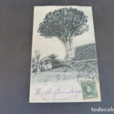 Postales: GRAN CANARIA DRAGO REVERSO SIN DIVIDIR. Lote 215993161