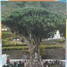 Postales: POSTAL N°696 DRAGO MILENARIO ICOD DE LOS VINOS TENERIFE. Lote 217789433
