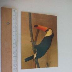 Postales: POSTAL LAS PALMAS DE GRAN CANARIA. PALMITOS PARK. COLECCION PDERLA. SIN CIRCULAR. POST CARD. Lote 218656983