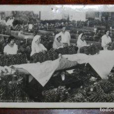 Postales: FOTO POSTAL DE TENERIFE, EMPAQUETADO DE PLATANOS, NO CIRCULADA.. Lote 218970291
