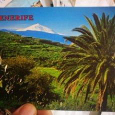 Postales: POSTAL TENERIFE PAISAJE TÍPICO AL FONDO EL TEIDE N 5597 PERLA ESQUINAS PELÍN TOCADAS. Lote 221778093