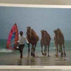 Postales: POSTAL DE LAS ISLAS CANARIAS. CAMELLOS. SIN CIRCULAR. Lote 222125452
