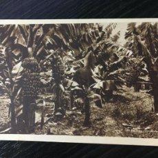 Postais: LAS PALMAS DE GRAN CANARIA - POSTAL UN PLATANAR. Lote 223687623