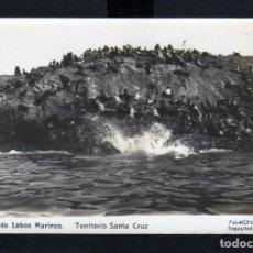 Postales: LLAMATIVA POSTAL DE LA ISLA DE LOS LOBOS MARINOS TERRITORIO SANTAN CRUZ. Lote 230369120