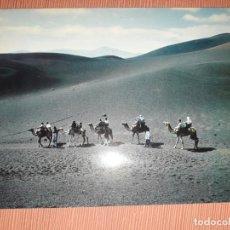 Postales: Nº 4689 POSTAL LANZAROTE CAMELLOS EN LA MONTAÑA DEL FUEGO. Lote 233378785
