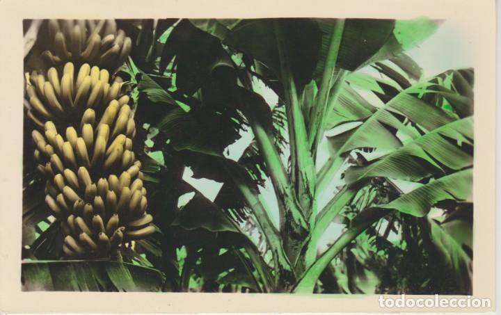 (68) SANTA CRUZ DE TENERIFE. PLATANERAS .. SIN CIRCULAR (Postales - España - Canarias Moderna (desde 1940))