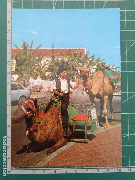 POSTAL 2728 PUERTO DE LA CRUZ CAMELLOS Y CAMELLEROS. PEDIDO MÍNIMO 5€ (Postales - España - Canarias Moderna (desde 1940))