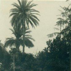 Postales: SANTA CRUZ DE TENERIFE. PARQUE DE MISTER BELLAMY. HACIA 1920. JG Nº 55. MUY RARA.. Lote 261862000