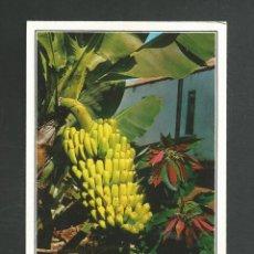 Postales: POSTAL SIN CIRCULR ISLA DE TENERIFE 2039 EDITA GASTEIZ. Lote 261985605