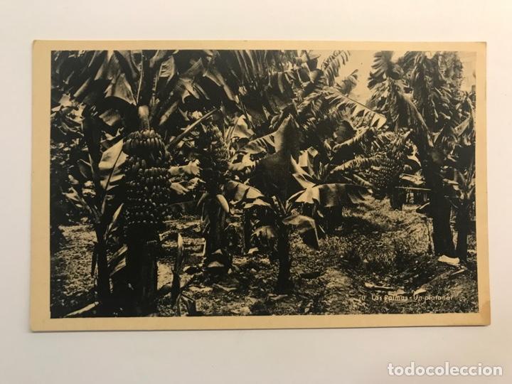 LAS PALMAS, POSTAL NO.70, UN PLATANAR. EDIC., BAZAR ALEMÁN (H.1940?) S/C (Postales - España - Canarias Moderna (desde 1940))