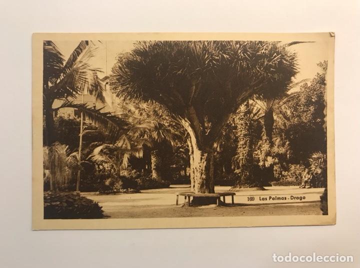 LAS PALMAS, POSTAL NO.169, DRAGO. EDIC., BAZAR ALEMÁN (H.1940?) S/C (Postales - España - Canarias Moderna (desde 1940))