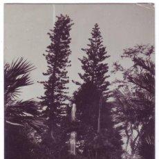 Postales: PUERTO DE LA CRUZ (TENERIFE): JARDÍN BOTÁNICO. J.G. NO CIRCULADA (AÑOS 10 - 20). Lote 270357538