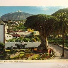 Postales: POSTAL. ICOD OF THE WINES, TENERIFE. CANARY ISLAND (H.1960?) S/C. Lote 271591733