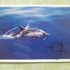 Postales: CANARIAS - GOMERA - DELFÍN COMUN - 1996. Lote 272248648