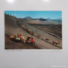 Postales: POSTAL CAMELS ON LANZAROTE CANARY ISLANDAS CAMELLOS (LAS PALMAS) SIN ESCRIBIR SIN CIRCULAR. Lote 276053233