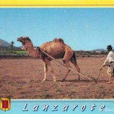 Postales: EM1219 LANZAROTE CAMELLO LABRANDO ESCUDO DE ORO TICKET PRE PAGO VER REVERSO. Lote 277552243