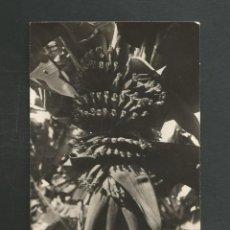 Postales: POSTAL SIN CIRCULAR TENERIFE BANANA Nº51 EDITA EDITORIAL FOTOGRAFICA. Lote 277557518