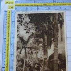 Postales: POSTAL DE TENERIFE. AÑOS 30 50. JARDÍN BOTÁNICO DE LA OROTAVA. OTTO AUER. 906. Lote 289453408