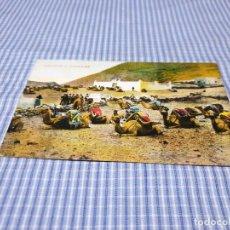 Postales: POSTAL ANTIGUA CANARIAS. LANZAROTE. CAMELLOS. Lote 295520553