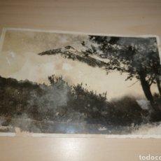 Postales: ANTIGUA POSTAL DE TENERIFE. Lote 297032373