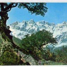 Postales: POSTAL PICOS DE EUROPA ASTURIAS MACIZO ORIENTAL DESDE CARRETERA DE POTES A ESPINAMA. Lote 13082667