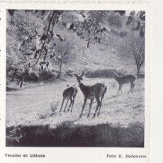 Postales: CANTABRIA - POTES - SANTANDER - VENADOS EN LIEBANA - FOTO E. BUSTAMANTE . Lote 35763763