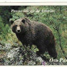 Postales: +-+ PV883 - POSTAL - FAUNA SALVAJE DE ASTURIAS - OSO PARDO - SIN CIRCULAR. Lote 40734567