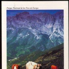 Postales: PARQUE NACIONAL DE LOS PICOS DE EUROPA.- VALLE DE VALDEON. Lote 98431023