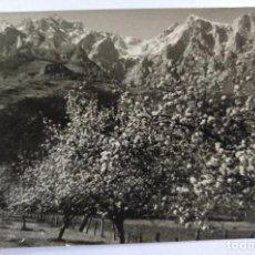 Cartes Postales: POTES SANTANDER PICOS DE EUROPA REGION DE LLEBANA ALMENDROS FOTO E. BUSTAMANTE. Lote 126457271
