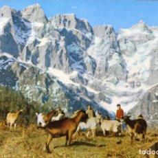 Cartes Postales: PICOS DE EUROPA - MACIZO ORIENTAL DESDE LA CALVERA (CANTABRIA, LEÓN, ASTURIAS) - FOTO BUSTAMANTE. Lote 139577078