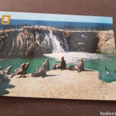 Postales: CANTABRIA SANTANDER PENÍNSULA DE LA MAGDALENA - FOCAS N°188. Lote 211475356