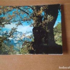 Postales: PICOS DE EUROPA (CANTABRIA) - OTOÑO EN EL VALLE DE LIÉBANA. Lote 263006065