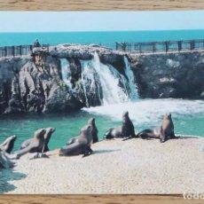 Postales: POSTAL - PENÍNSULA DE LA MAGDALENA, FOCAS - SANTANDER (CANTABRIA) DOMÍNGUEZ.. Lote 268828754