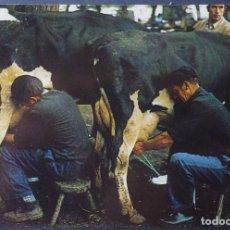 Postales: SANTANDER, EL ORDEÑO, ANTIGUA POSTAL SIN CIRCULAR ESCUDO DE ORO. Lote 278763953