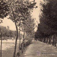 Postales: POSTAL SIN CIRCULAR DE ALBACETE,PASEOS DEL PARQUE.. Lote 23970634
