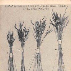 Postales: TRIGO.- EXPERIENCIA HECHA POR D. PEDRO MARÍA REDONDO DE LA RODA (ALBACETE). Lote 79846925