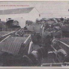 Postais: ALCAZAR DE SAN JUAN (CIUDAD REAL) - PATIO BODEGA NUEVA EN UN DIA DE RECOLECCION. Lote 83682392
