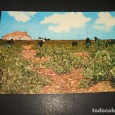 Postales: TOMELLOSO CIUDAD REAL VENDIMIA JUNTO AL BOMBO. Lote 132793358