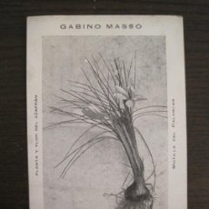 Postales: MOTILLA DEL PALANCAR-GABINO MASSO-PLANTA Y FLOR DEL AZAFRAN-POSTAL ANTIGUA-VER FOTOS-(68.502). Lote 196108006