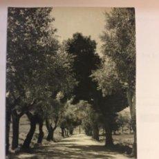 Postales: JADRAQUE - PASEO DEL CASTILLO - Nº 6. Lote 196773686