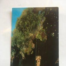 Cartes Postales: POSTAL. TRAGACETE. CASCADA DEL RÍO CUERVO. ZERKOWITZ.. Lote 205207300