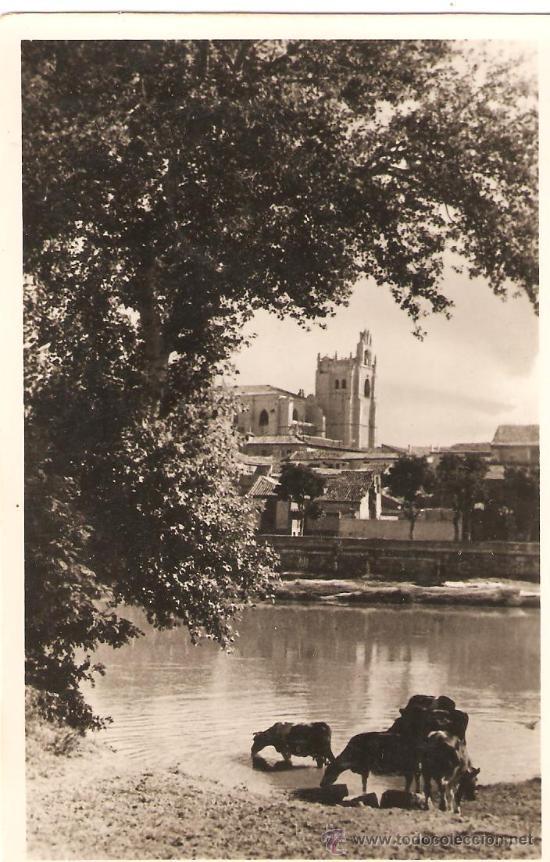 POSTAL PALENCIA VISTA DE LA CATEDRAL DESDE EL RIO.EXCLUSIVA:LIB.RINCON.SIN CIRCULAR. (Postales - España - Castilla y León Antigua (hasta 1939))