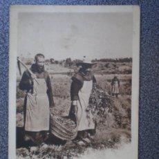 Postales: POSTAL ANTERIOR A 1905 TRAPENSES RECOGIENDO JUDIAS COLECCIÓN CANOVAS. Lote 35584056