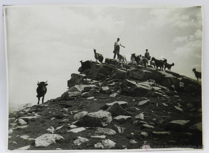 FOTOGRAFIA DEL PICO DE URBION, SORIA, AGOSTO DE 1953, MIDE 23 X 17 CMS. (Postales - España - Castilla y León Antigua (hasta 1939))