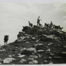 Postales: FOTOGRAFIA DEL PICO DE URBION, SORIA, AGOSTO DE 1953, MIDE 23 X 17 CMS.. Lote 42280103